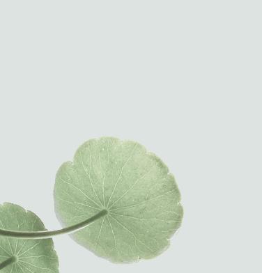 home_yoga_lotus3